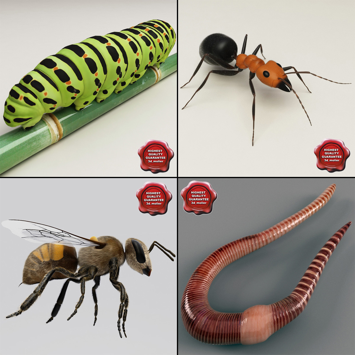 Insects_Collection_00.jpg