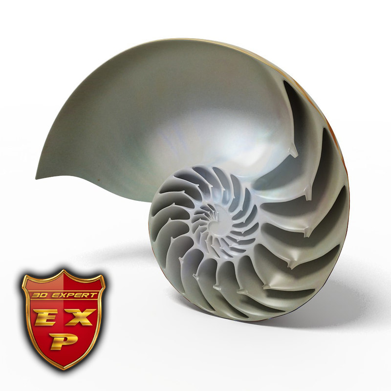Seashell Nautilus sliced