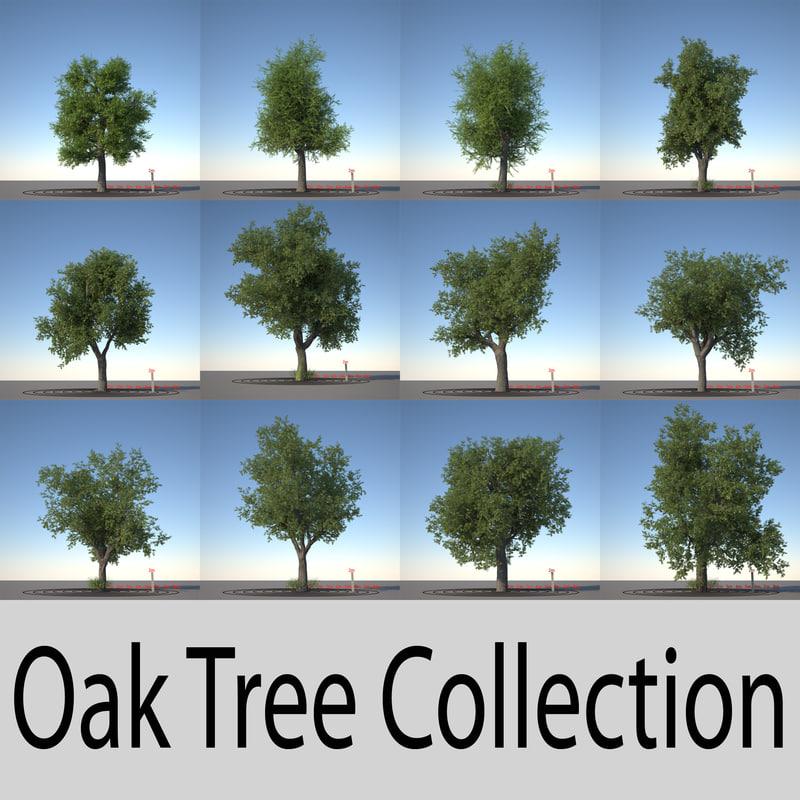 oak_collection_header.jpg