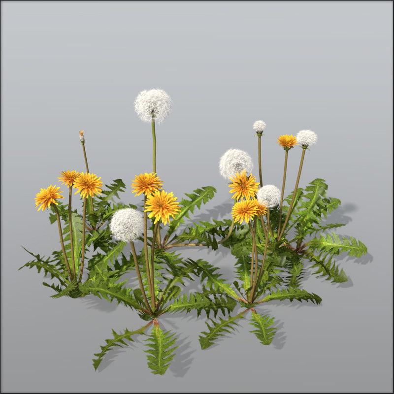 Dandelion_bundle.jpg