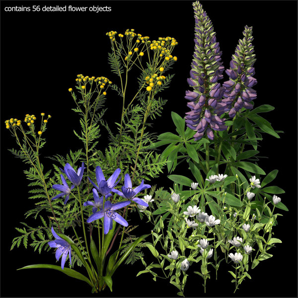 Wildflowers vol.1 3D Models