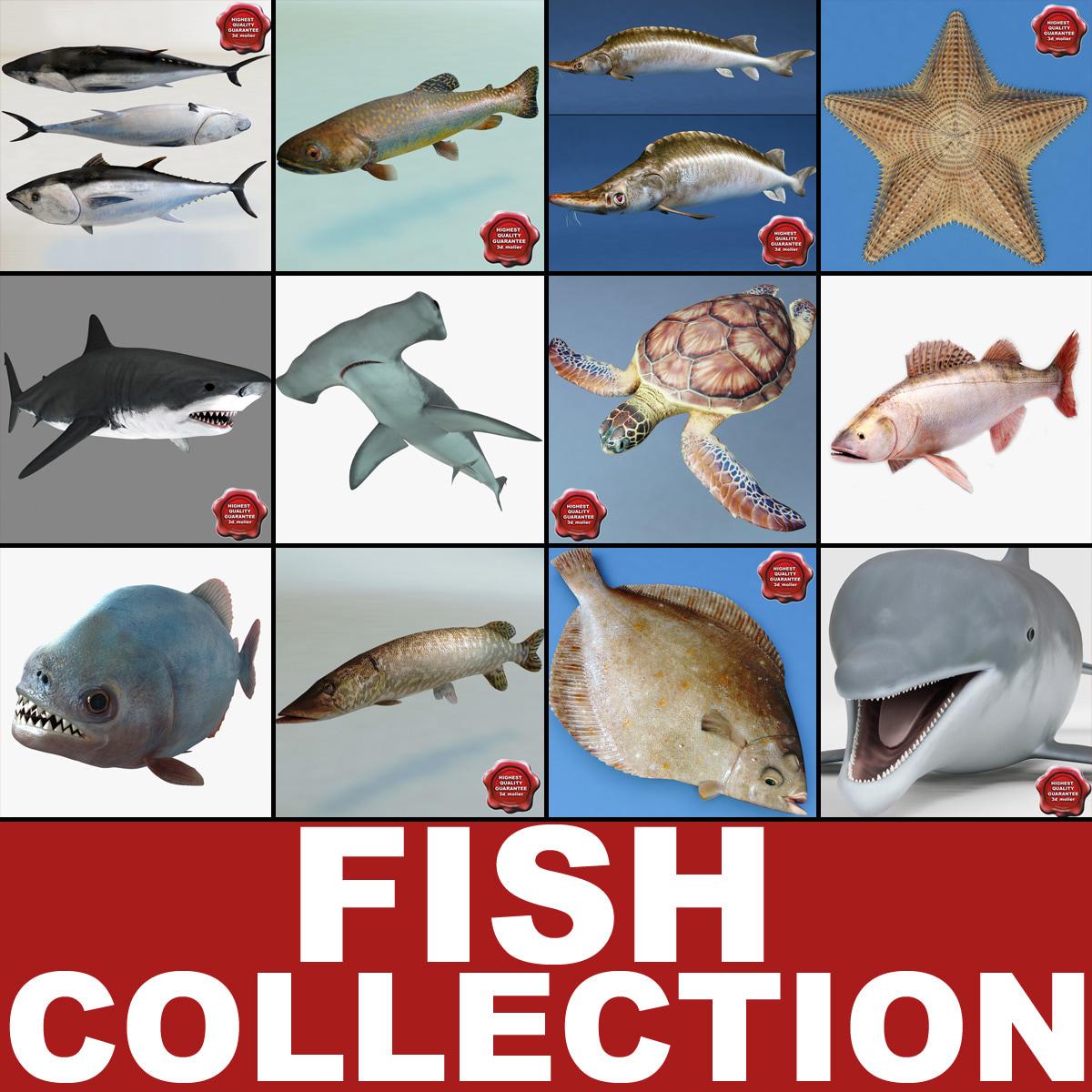Fishs Collection V5