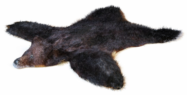 Skin bear Texture Maps