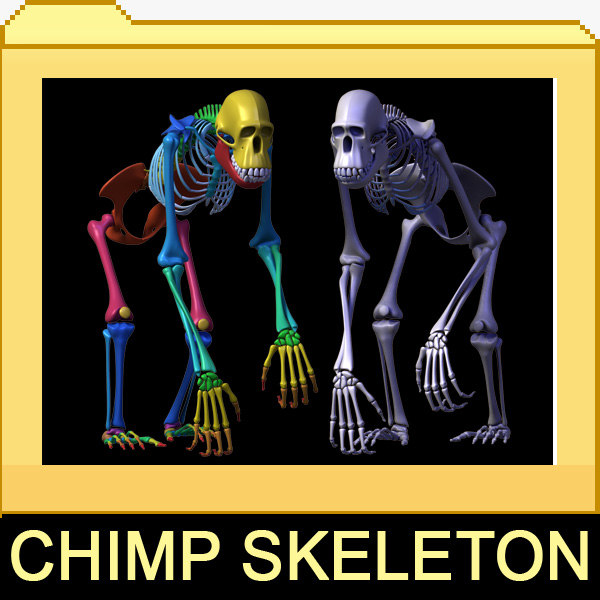 Chimp_skeleton_leo3d_000.jpg