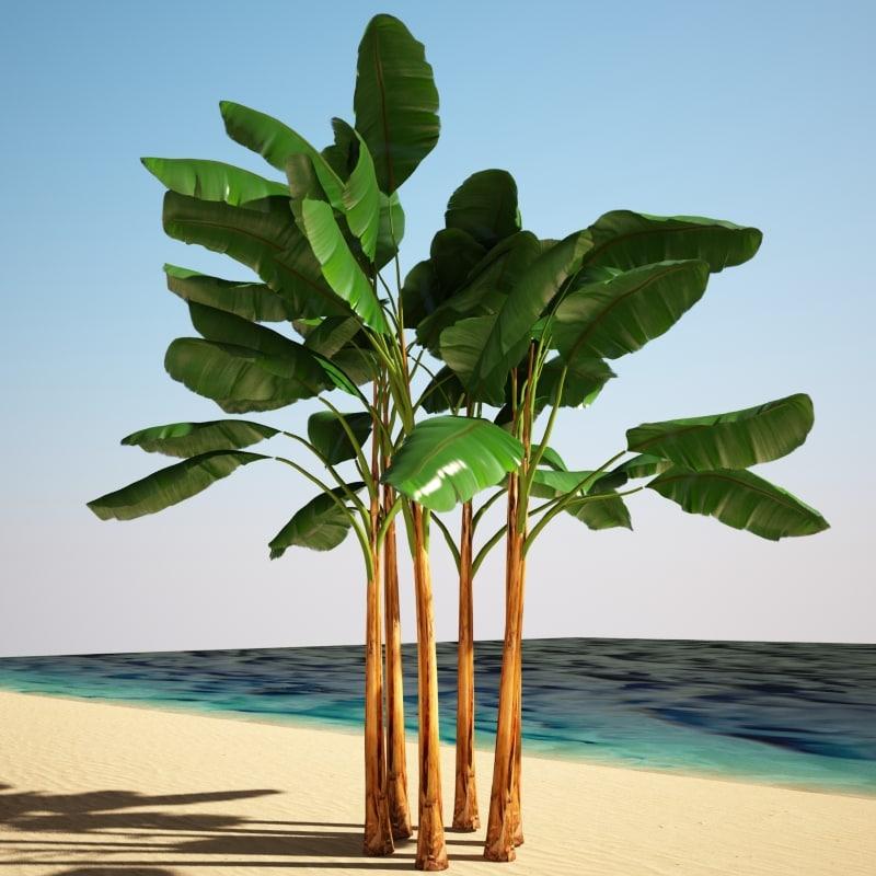 banana_trees_1.jpg