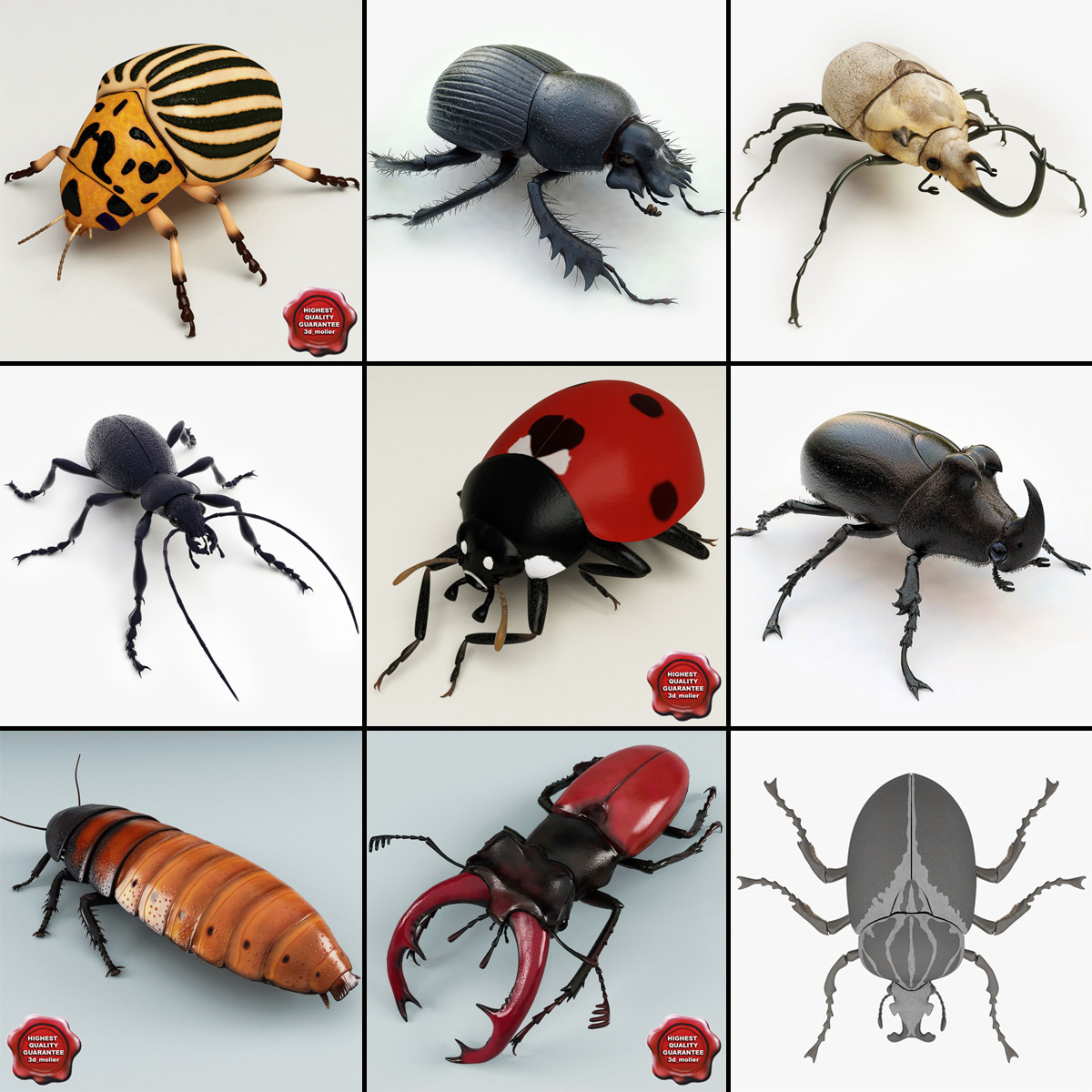 Bugs_Collection_V4_000.jpg
