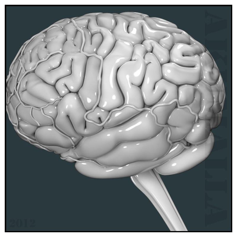 brain_04.jpg