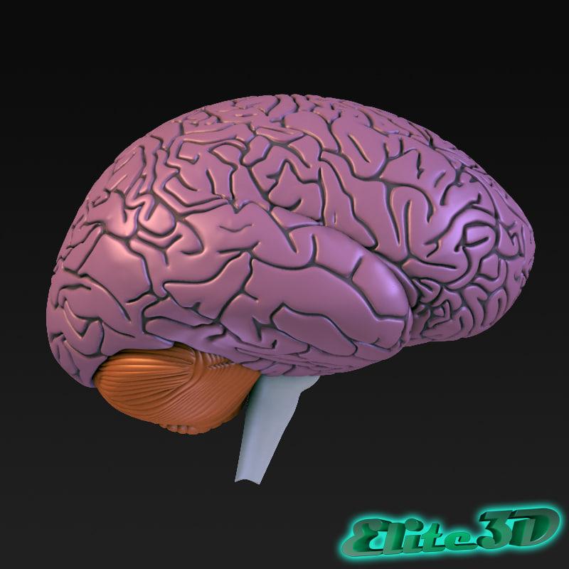 BrainSection_Standard_Left.jpg