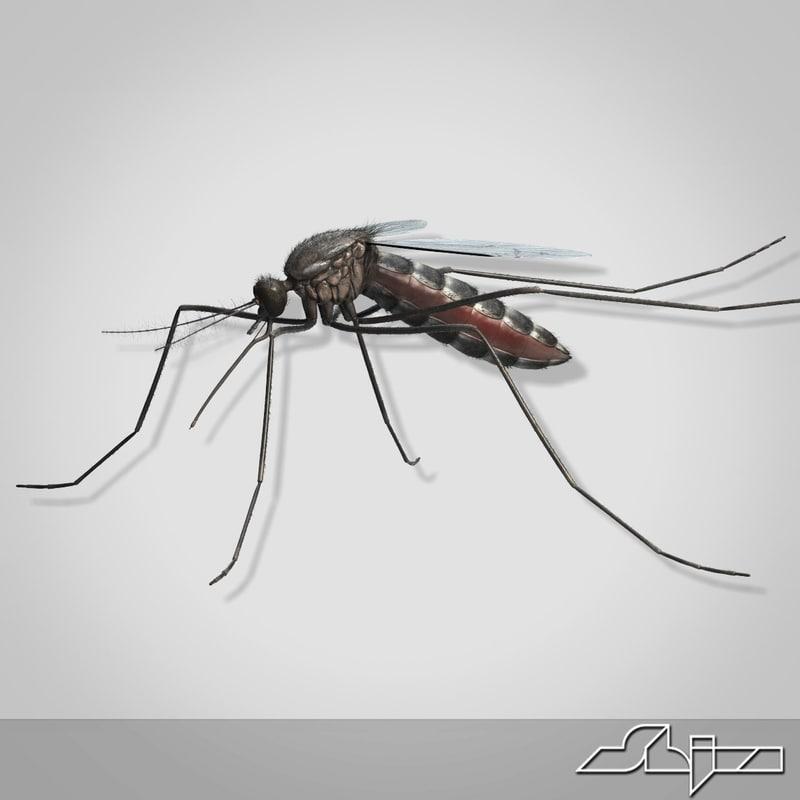 Mosquito_render-0.jpg