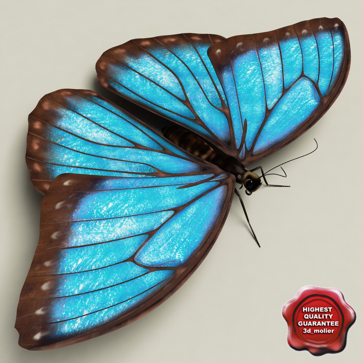 Blue_Morpho_Butterfly_Pose5_00.jpg
