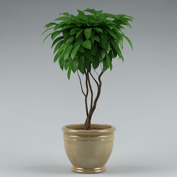 plant_45 3D Models