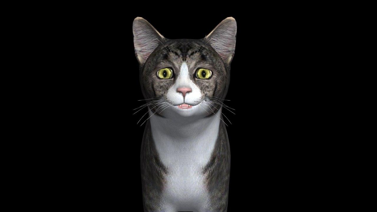 cat_rander.jpg