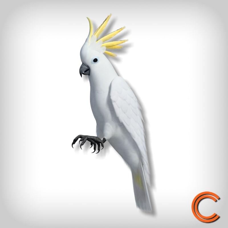 Parrot Cacatua