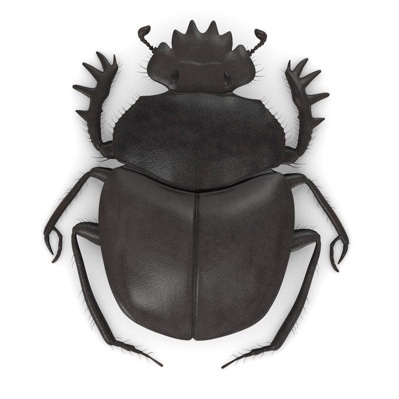 scarabb.jpg