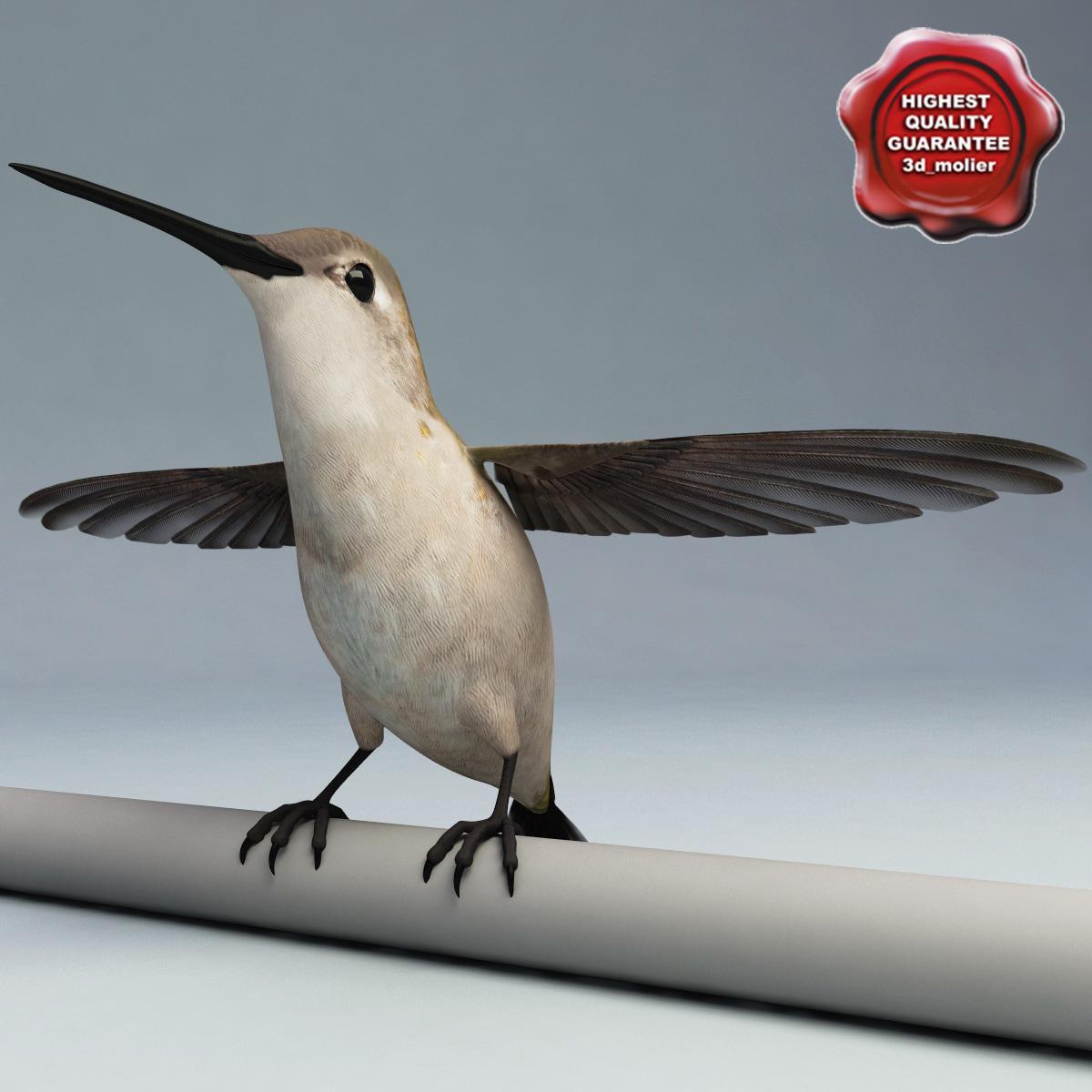 hummingbird pose3 3d max
