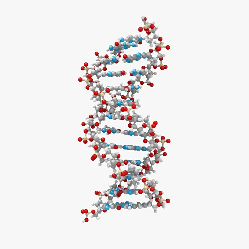 dna_fromDataset_thin_v001_rgb0000-247.png