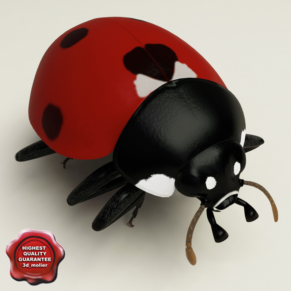Ladybug_Pose3_00.jpg