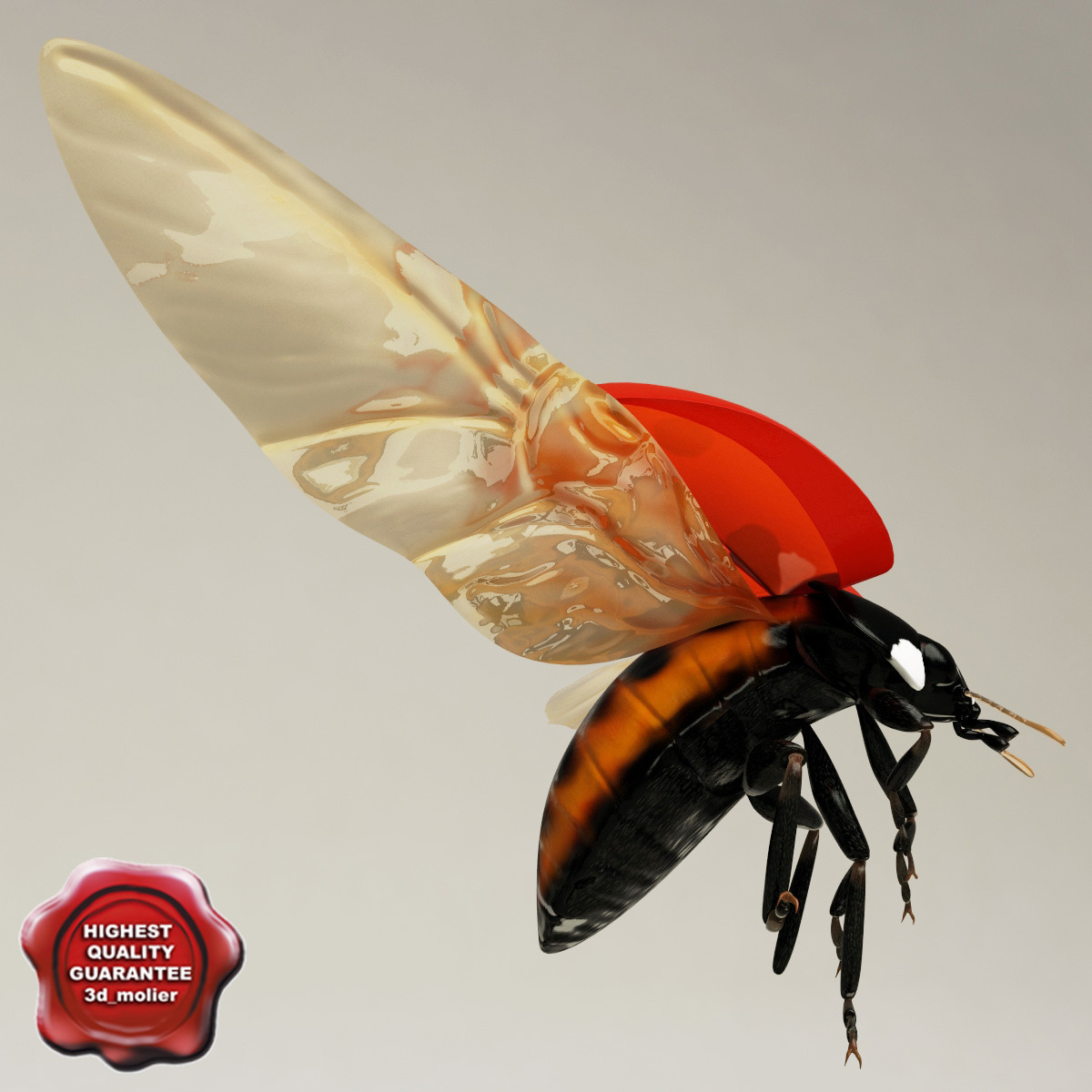 Ladybug_Pose1_00.jpg
