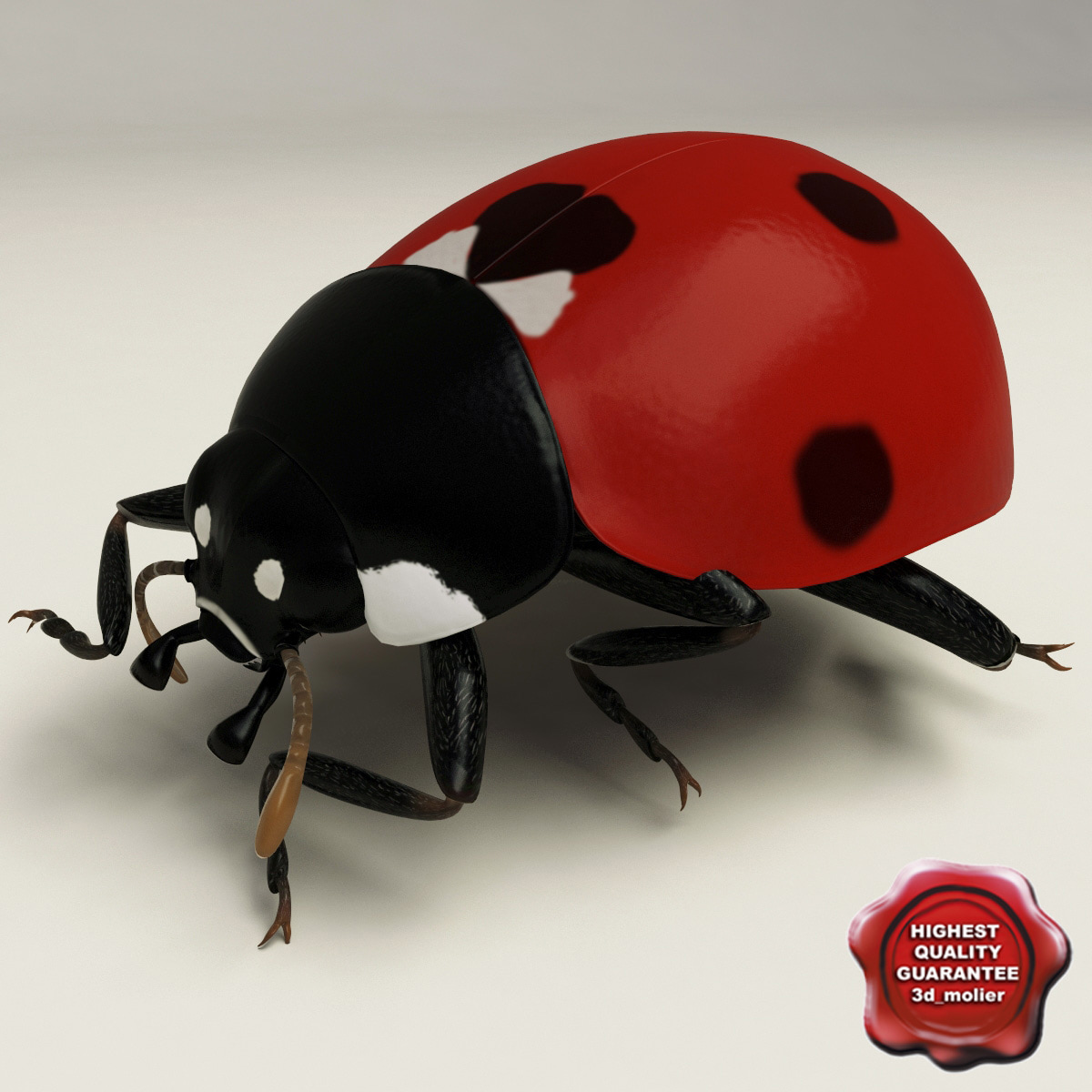 Ladybug_Pose4_00.jpg