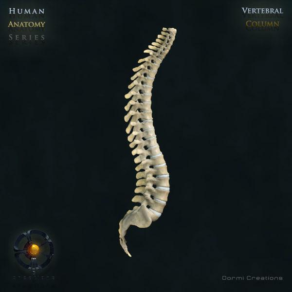 Human Vertebral Column (Rigged) 3D Models