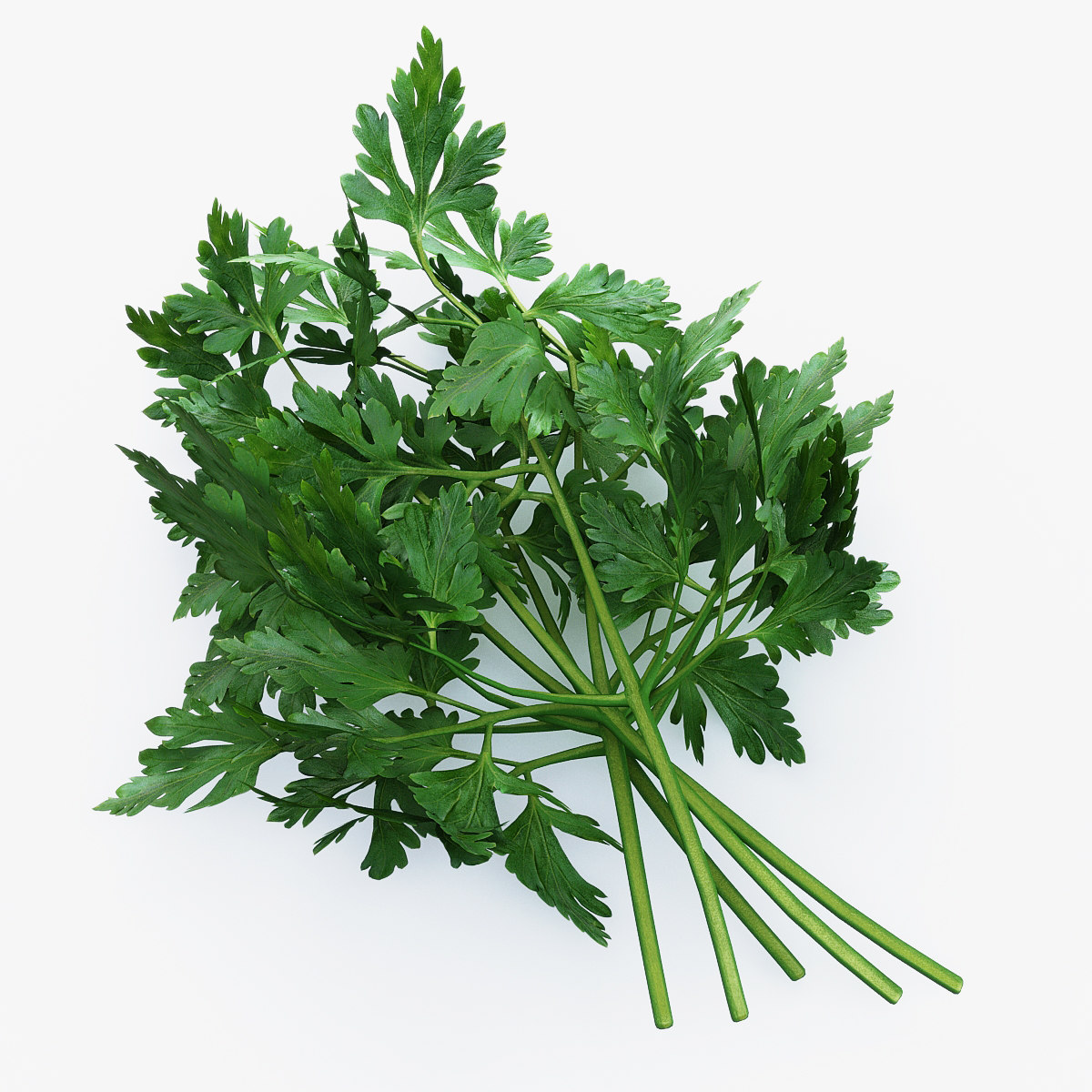 Parsley_01.jpg