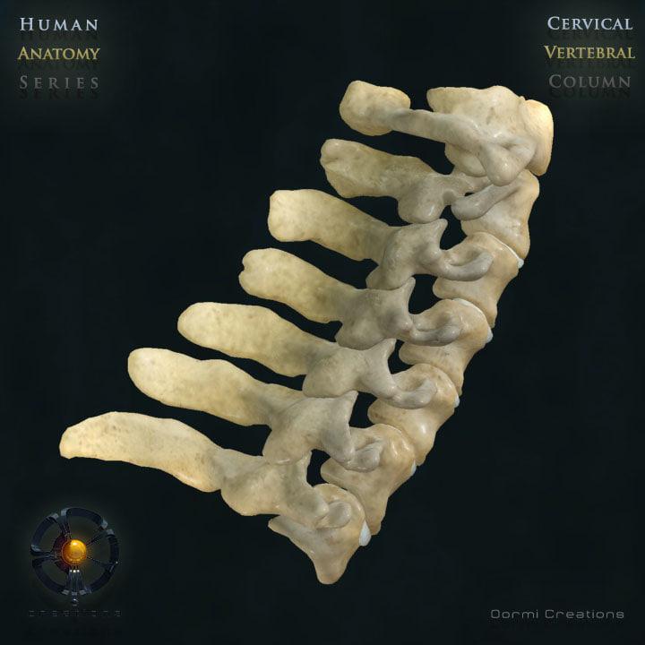 Oormi-VC-Cervical-V2-00.jpg