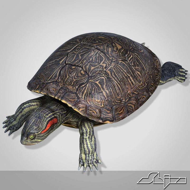 Turtle_render-4.jpg