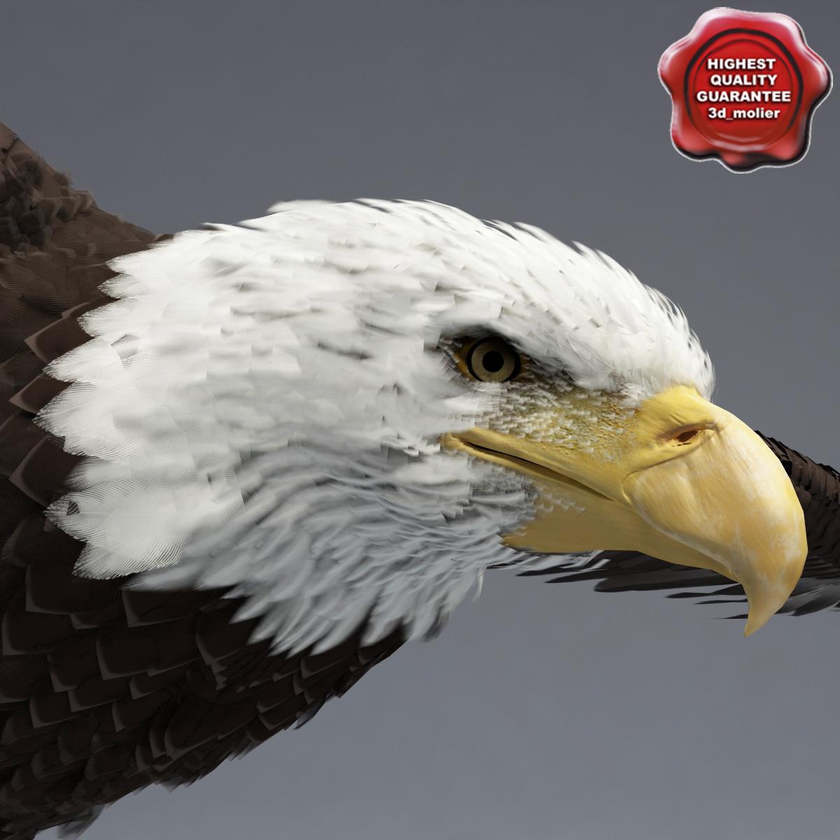 Bald_Eagle_Pose2_00.jpg