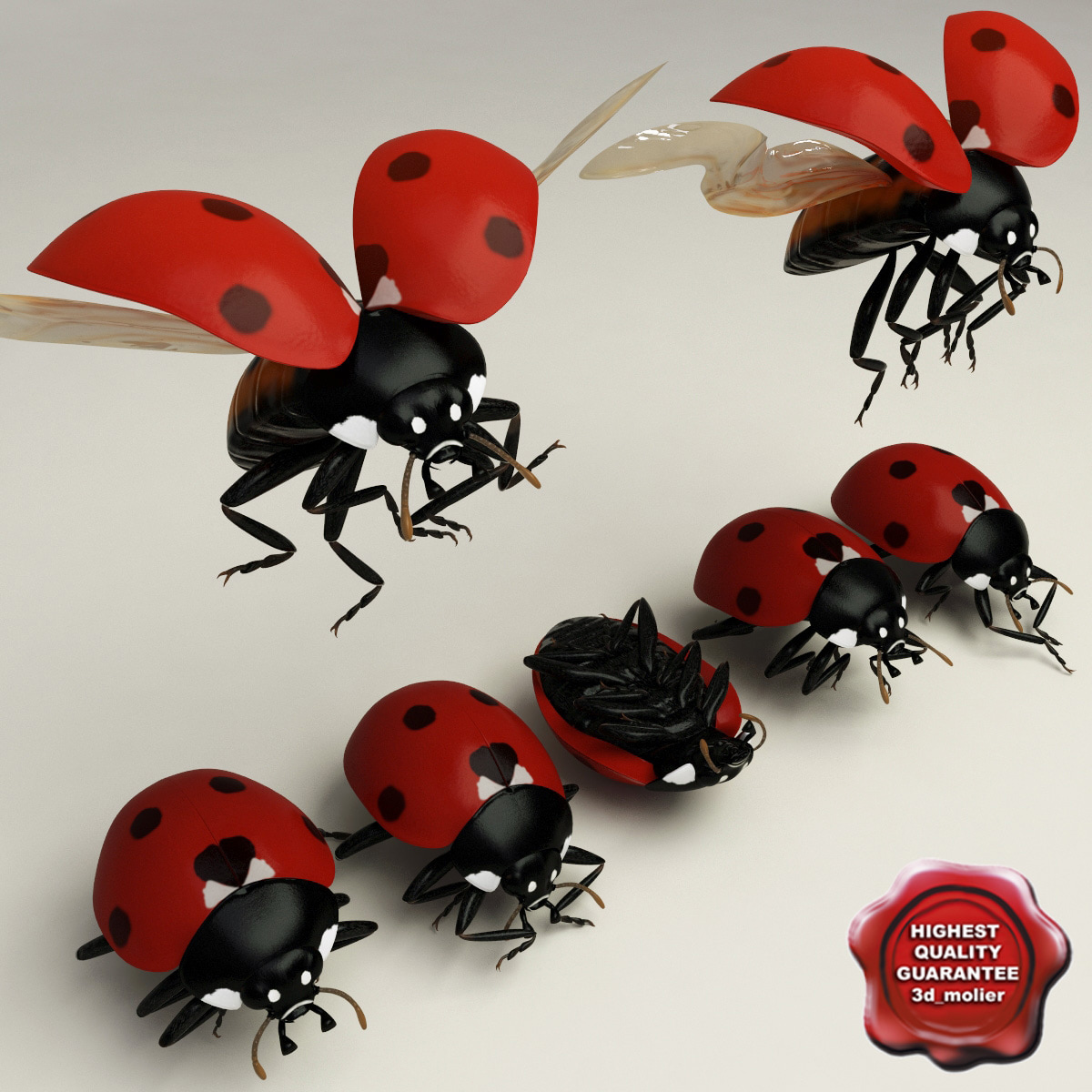 Ladybug_Poses_Collection_00.jpg