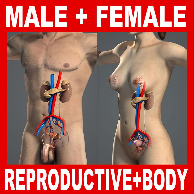 Male_Female_Repro_Body_Title.jpg