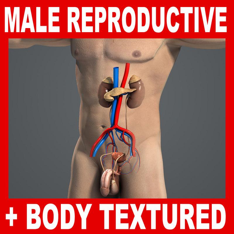 Male_Repro_Body_Title.jpg