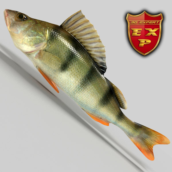 Perch fish 3D Models