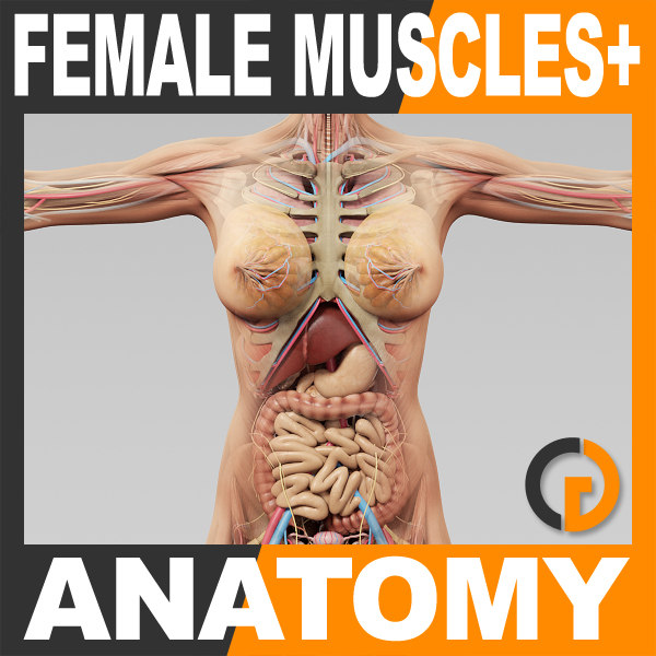 Human Female Anatomy - Body, Muscles, Skeleton and Internal Organs 3D Models
