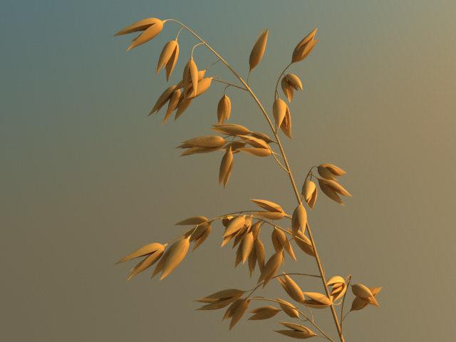 oats1.jpg