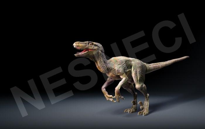 Raptor_ColorComp_v001_KK.jpg