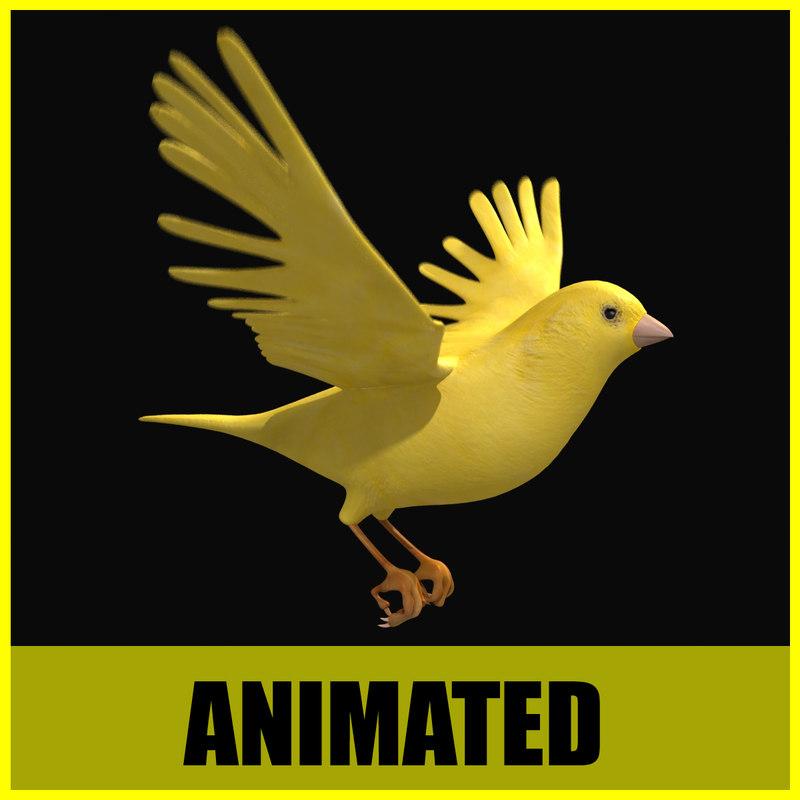 Canary - Animated