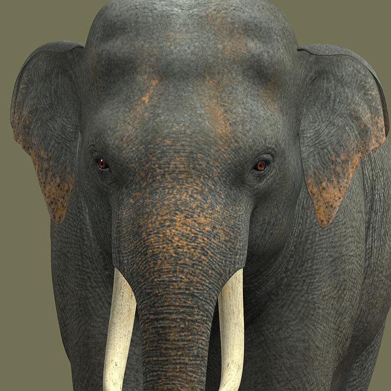 elephant_dg_13.jpg