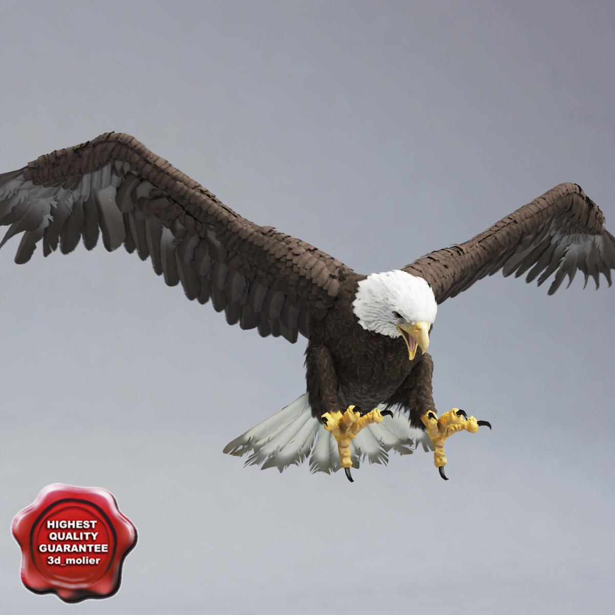 Bald_Eagle_Pose4_00.jpg