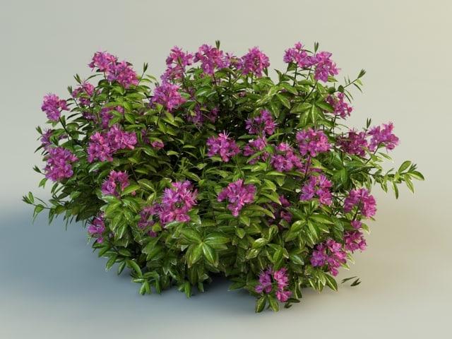 rhododendron_2.jpg