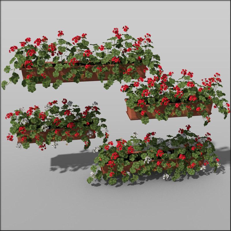 Pelargonium_flowerbox.jpg