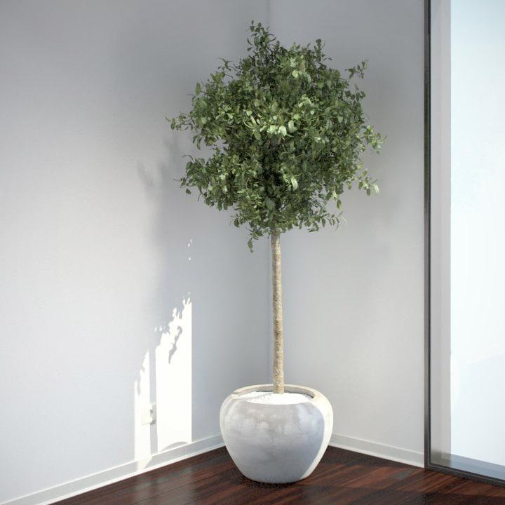 VP-Bay-Laurel-Tree-v4-feature.jpg
