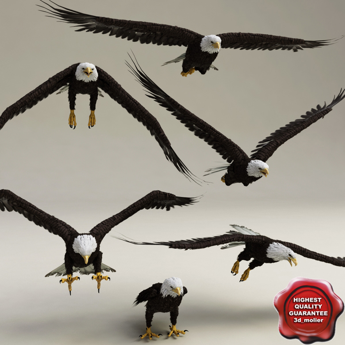 Bald Eagles Poses Collection