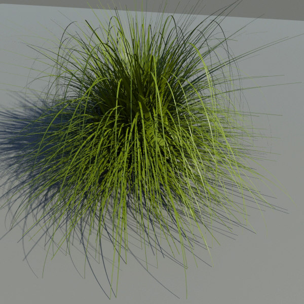 Japanese Silver Grass 3D Models