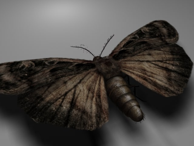 moth_03.jpg