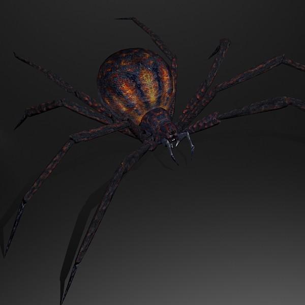 Spider 3D Models