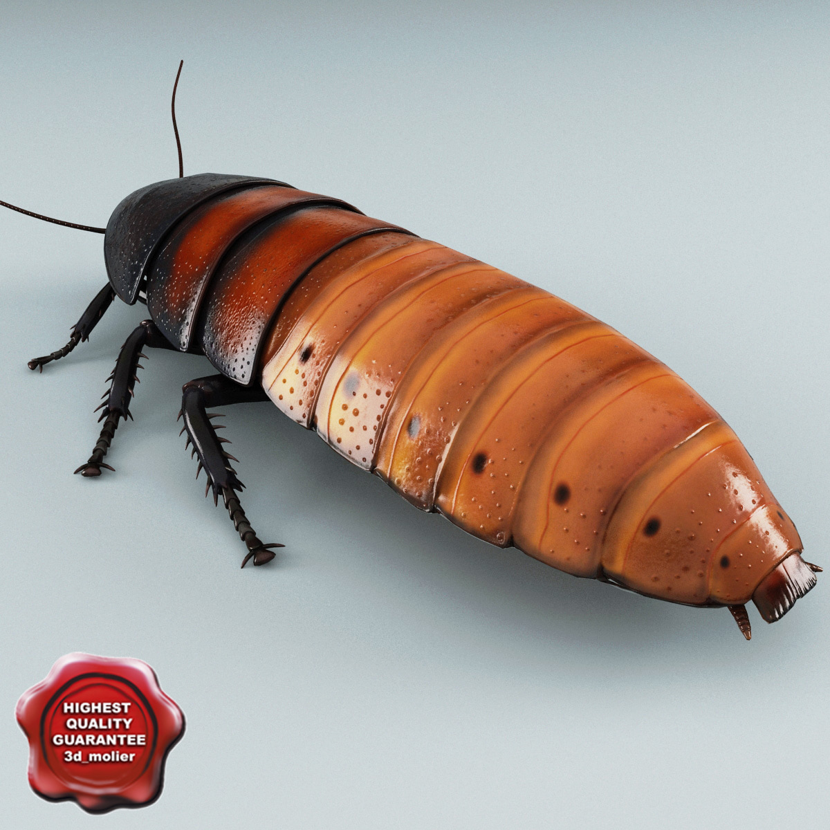 Madagascar_Hissing_Cockroach_00.jpg