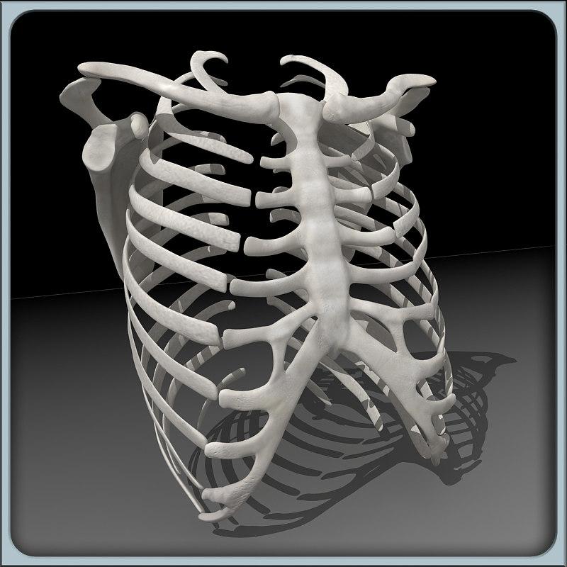 ribcage_00.jpg