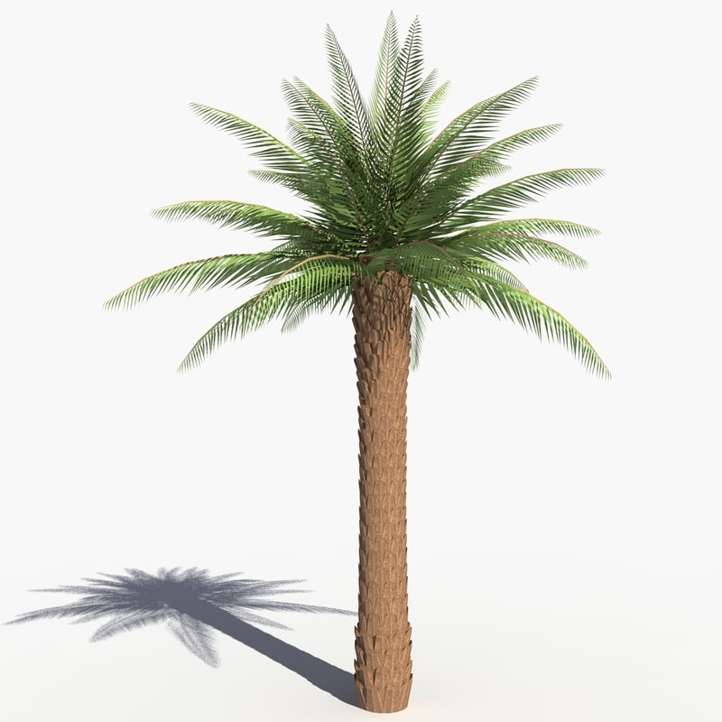 solarseas_palm_tree-.jpg