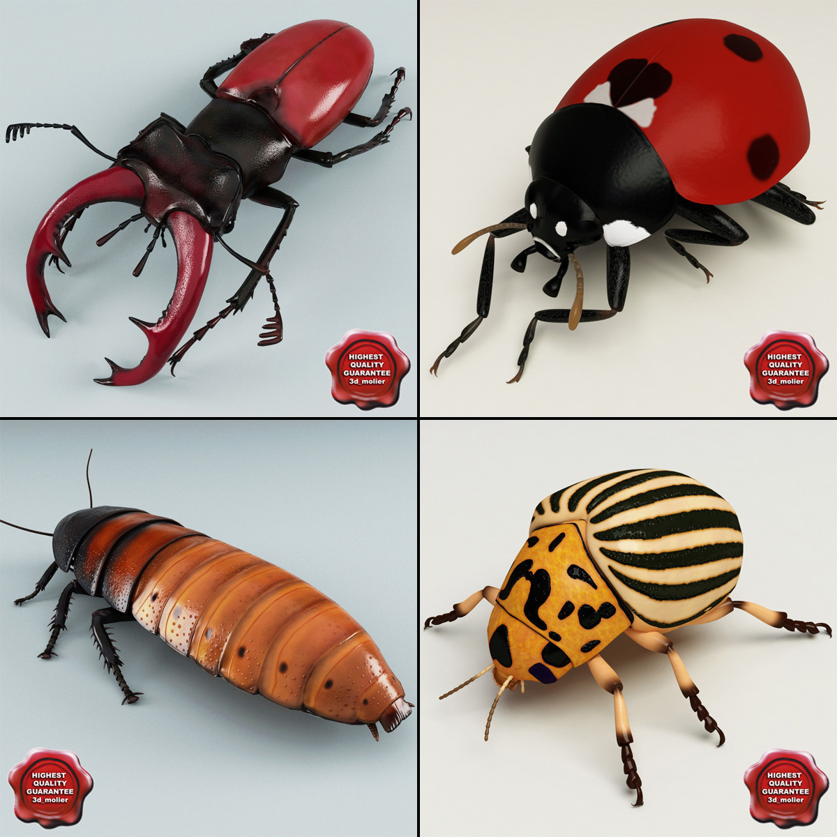 Bugs_Collection_00.jpg
