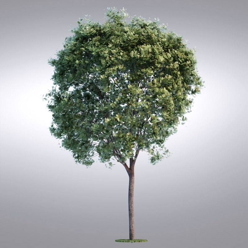 tree19_0001.jpg